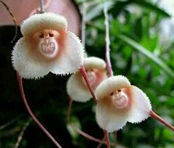奇花异草大集合 一些你没有见过的花儿