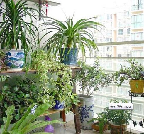 阳台种花养花方法和技巧,如何在阳台种花