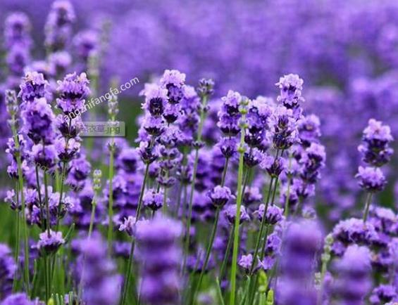 10种常见花卉名称和图片介绍