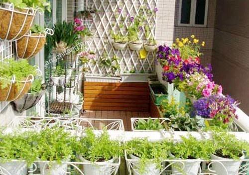 阳台养花的光照影响