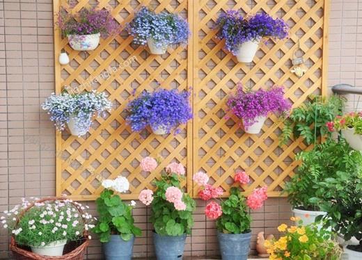 阳台养花要点
