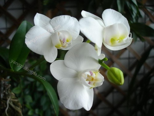 适合夏季的花卉植物推荐及其养护