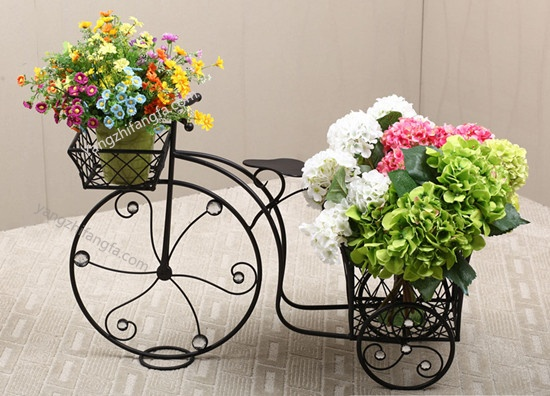 怎么选购花卉 买花的学问