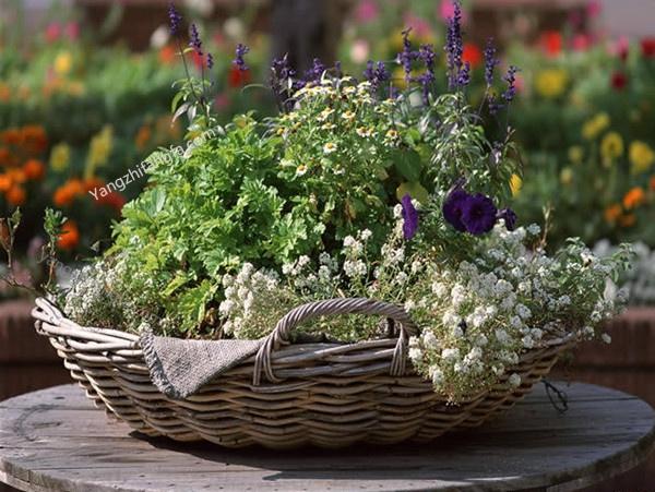 夏季家庭植物花卉的管理(6-8月)