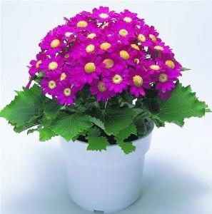 五大因素会影响观赏植物开花