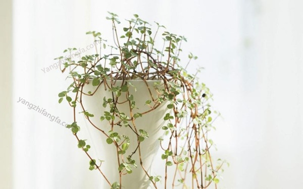 夏季花卉栽培养护方法