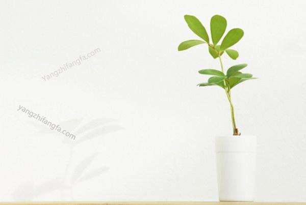 花卉繁殖常用的几种繁殖方法