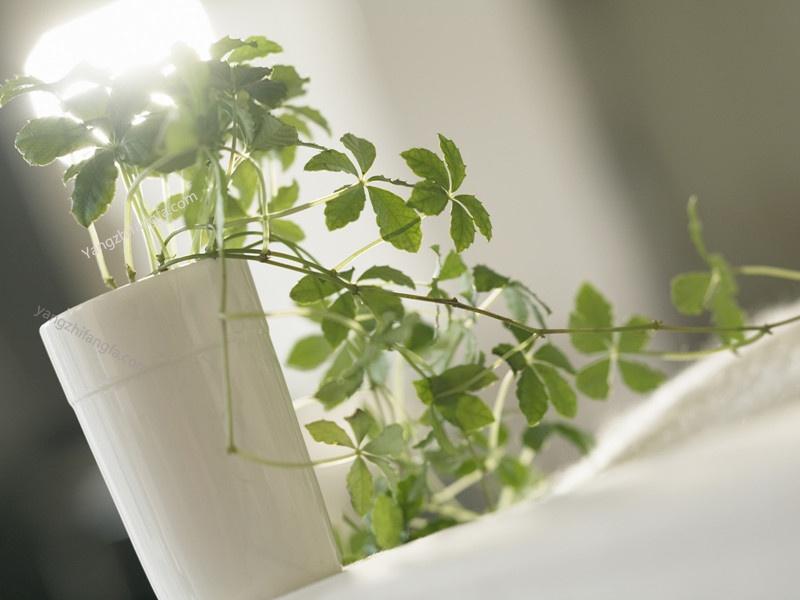 从植物的20个表现可以知道植物栽培的好不好