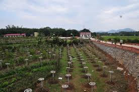 火龙果的养殖方法和注意事项