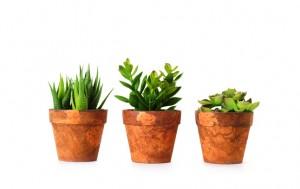 盆栽花卉怎样科学上盆的操作步骤