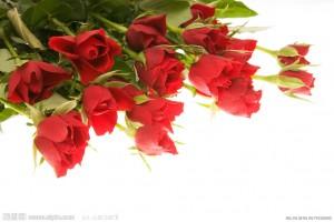 玫瑰花的养殖方法和注意事项