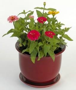 花盆土壤板结原因及解决方法