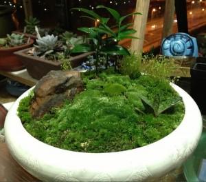 苔藓的养殖方法和注意事项