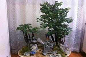 小叶紫檀的养殖方法和注意事项