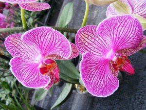 花卉名称大全及索引