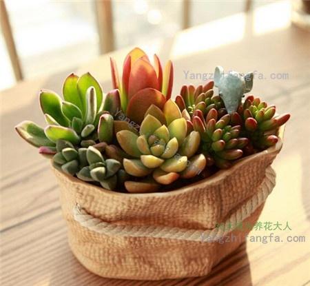 冬季多肉植物最怕它,花友们要注意啊!