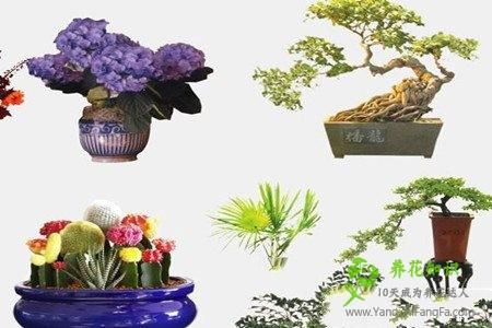 盆栽荷花如何选盆