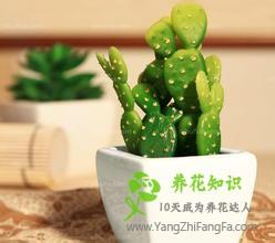 仙人掌的盆栽方法