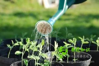 怎么防止天竺葵烂根