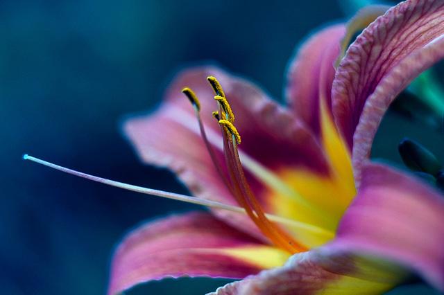 全新视觉 49张美丽的花卉摄影作品